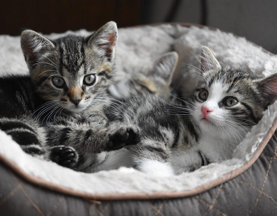 Trouver un bon produit antiparasitaire pour chat